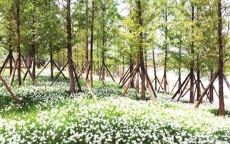 """福州光明港公园内 出现""""白雪皑皑""""景观"""