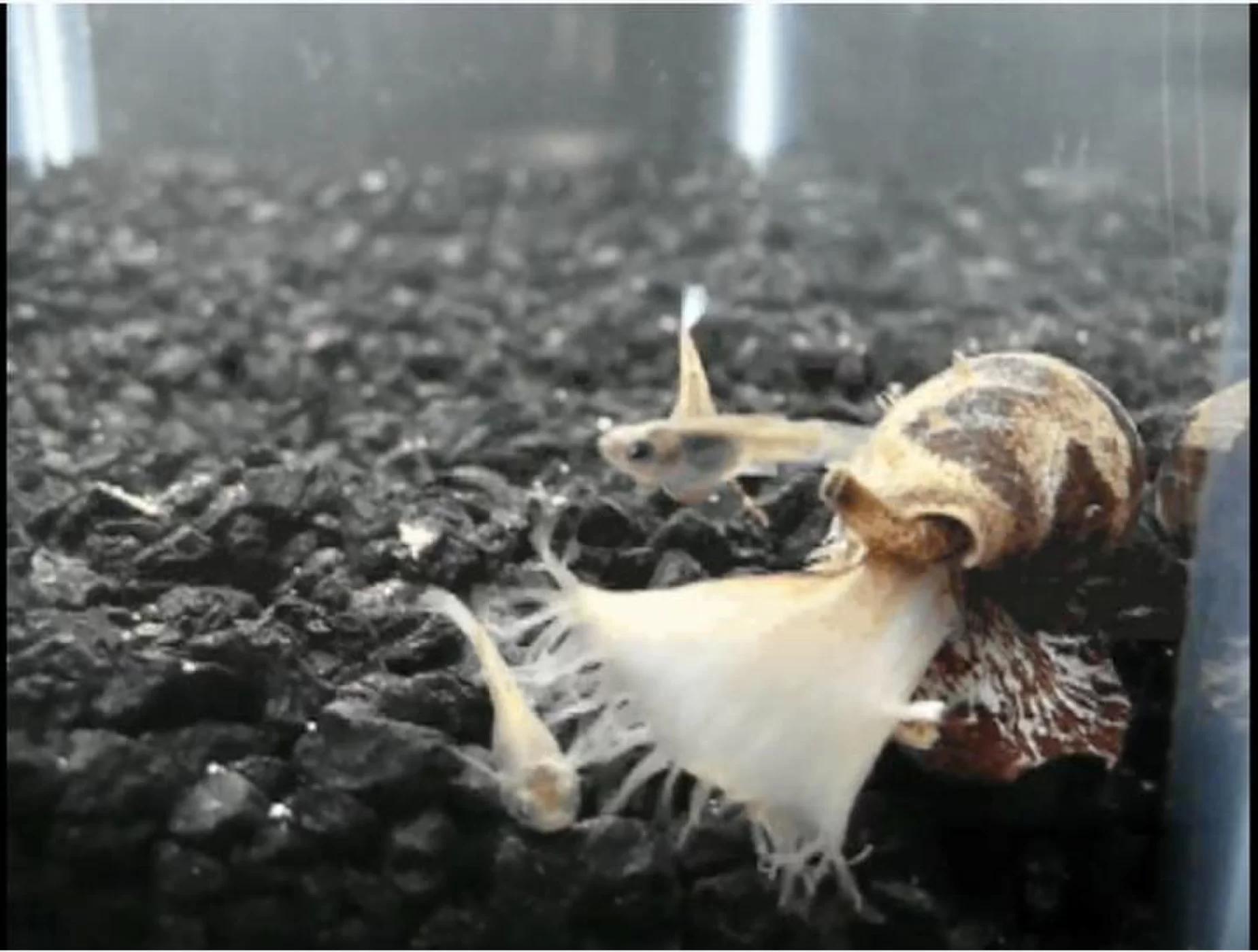 蜘蛛 蝎子 蜈蚣 锥形蜗牛,这些毒物竟成救命良药
