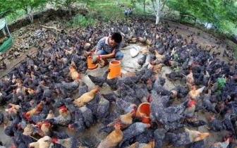 凤山县积极推进乡村振兴战略成效初显