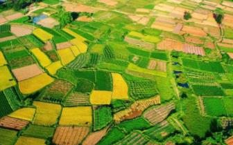 """蚌埠基本完成农业""""两区""""划定"""