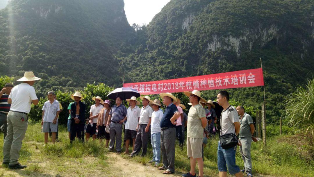 拔贡镇:柑橘种植技术培训助力脱贫攻坚