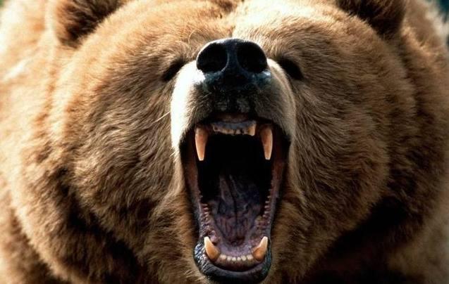 美摄影师野外游玩遇熊 全程镇定拍摄