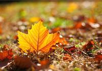 双语阅读:秋季到了 这份养生攻略请收好
