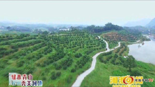 河池林业生态红利高  预计全年产值230亿