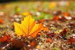 秋季食疗吃法不正确 当心你的肠胃