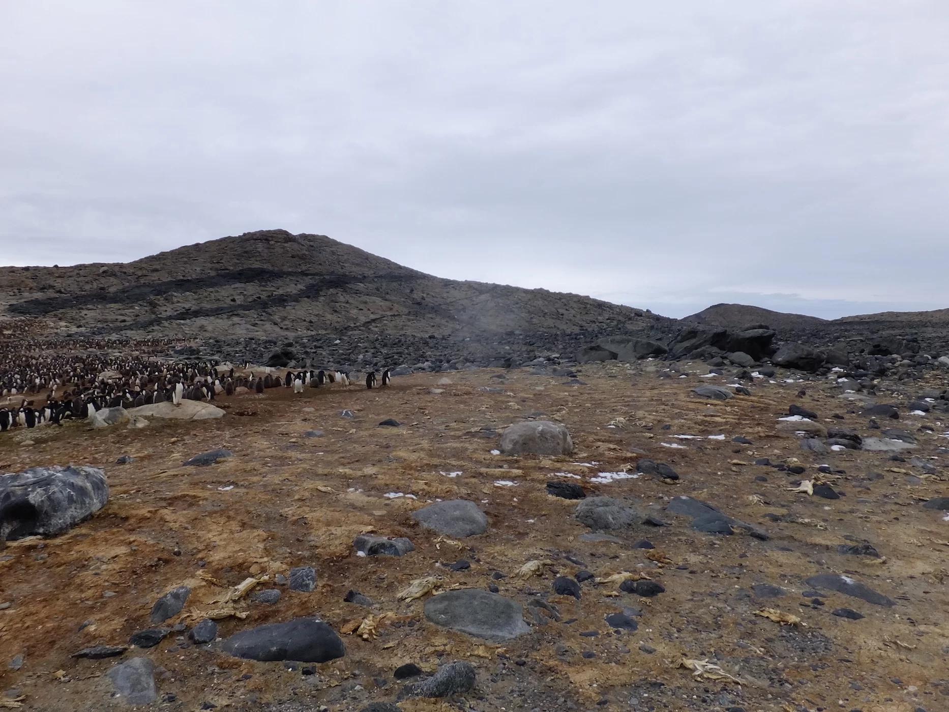 南极出现数万具企鹅干尸,极端气候是罪魁祸首!