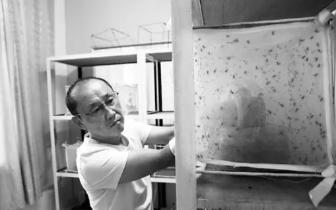 蟑螂 沧州这地专门养苍蝇蟑螂 还让它们睡空调屋