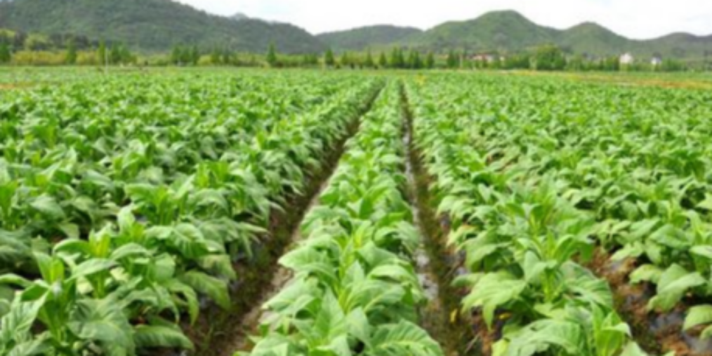 云南已有43个农险险种 上半年赔2.24亿元