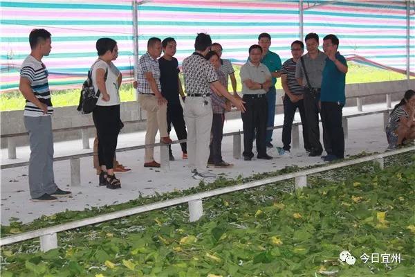 学习桑蚕业经验做法 促进产业提质发展