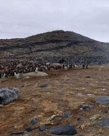 南极现数万企鹅干尸,极端气候是罪魁