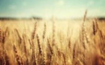 定州20万亩冬小麦将实施节水稳产配套技术
