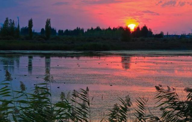 夕阳下的新疆玛纳斯湿地 如缤纷梦境!
