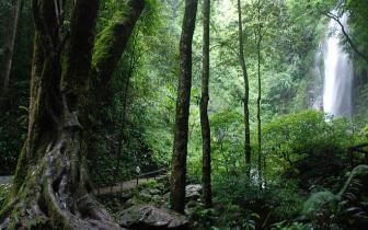 中国林业大数据中心和中国林权交易中心落户云南