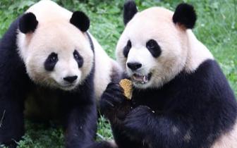 """野生动物吃上""""中秋团圆饭 """" 享用特色月饼大餐"""