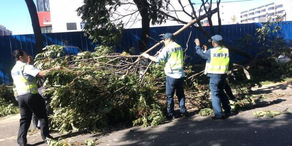 大风吹倒路边树 八达岭老路受阻40分钟