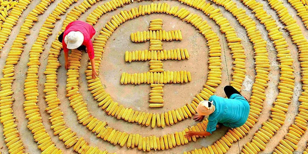 中国农民丰收节来了 习近平:这是一件影响深远的大事