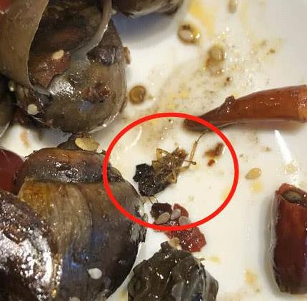 食客吃出蟑螂要求赔偿被说是敲诈 起诉索10倍赔偿