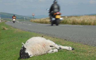 四川凉山州将出台政策:游客撞死活禽牲畜可按市价赔偿