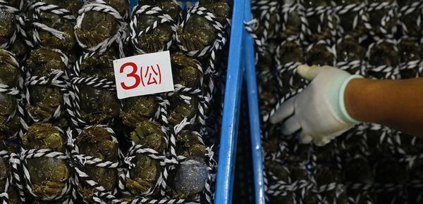 2018年的第一笼蟹 价格比去年要高一些