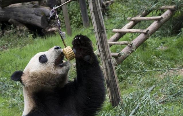 """动物也过中秋!小动物们乐享""""定制月饼"""""""