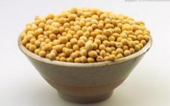 收获的季节 美国豆农忧心忡忡