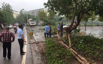 九龙坡:车辆后溜酿事故 连撞数物方停下