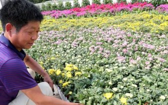 商丘园林工人在公园绿地摆放鲜花迎接国庆