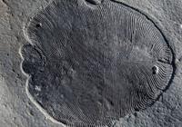 长得像煎饼的狄更逊水母,刷新了最古老动物记录