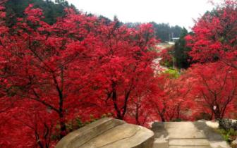 重庆五洲园开园啦!秋游赏红枫,来这儿就对了!