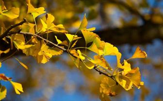 全国秋日排行榜告诉你 你家秋天有多长