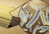 细菌+微型太阳能板,只要一个桶就能进行光合作
