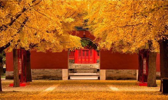 谁知道这是不是你在北京的最后一个秋天呢?