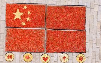 政和稠岭村:辣椒、玉米拼国旗庆国庆