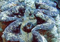 潜水者发现神秘发光巨蛤,听说有拯救地球的潜力