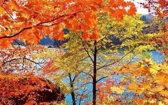 红叶谷|这个假期 最美的秋景都在这里了