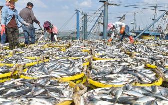福建:国庆渔港收获忙