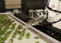 在美国,机器人正在代替农民工作
