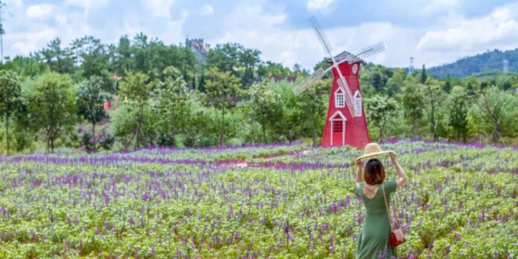 平远浪漫的紫色花海 带TA来曼佗山庄邂逅吧