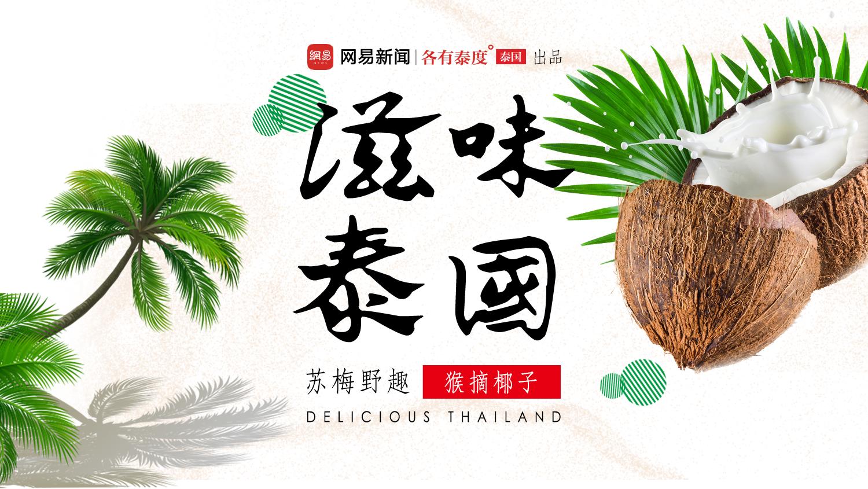 滋味泰国 | 体验苏梅岛民有机生活,猴子摘椰子