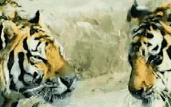 嗨翻暑假   雅戈尔动物园视频征集大赛活动全程回顾