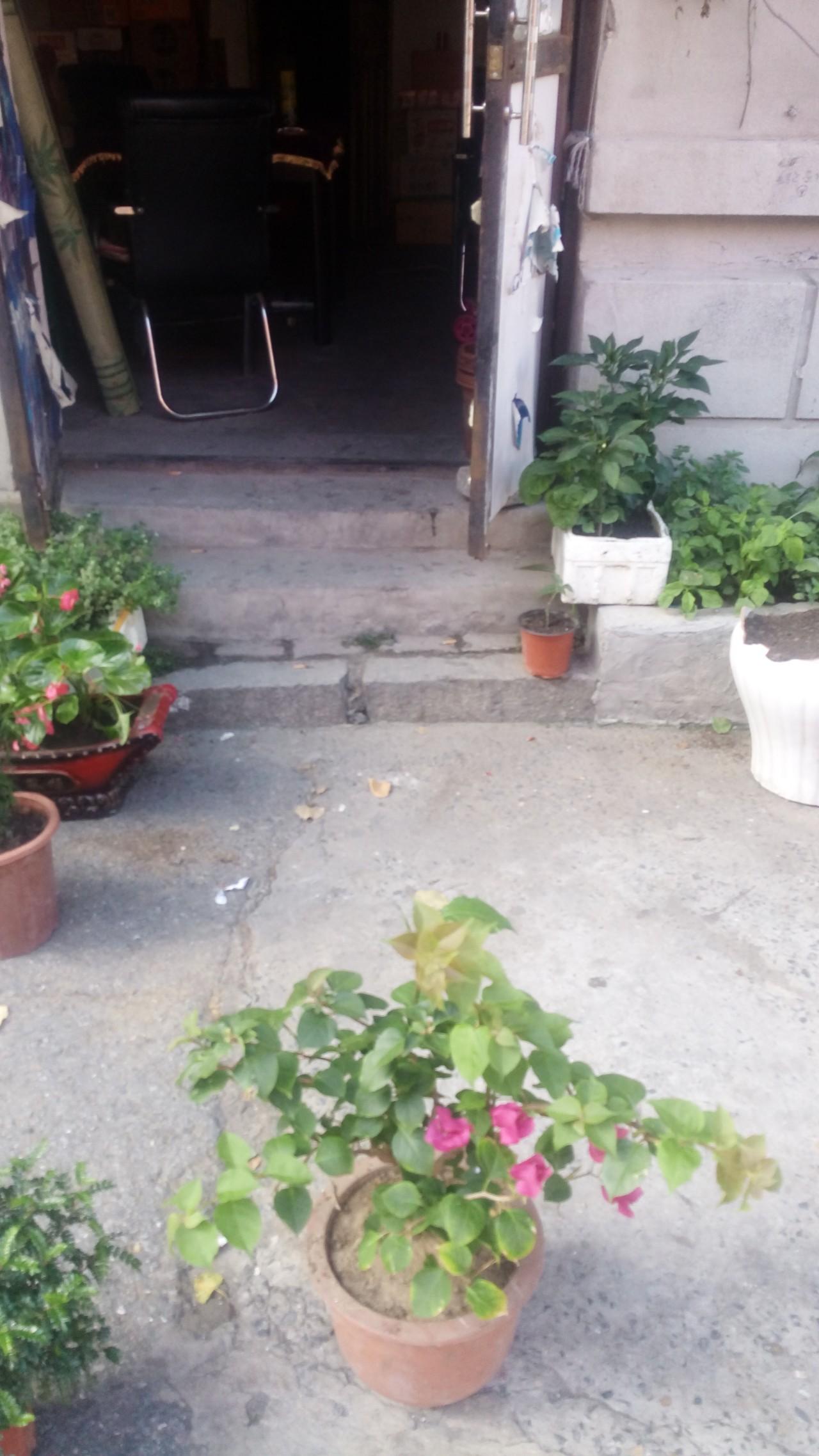 一楼敞门停局的麻将桌,门口是姐妹便利店养晒的花。 (作者供图)