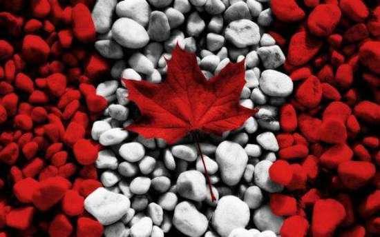 美国收紧H-1B签证 加拿大趁机抢挖顶尖外国人才