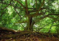 """死者胃部""""被称""""长出无花果树?土壤学家:不是不可"""