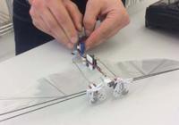荷兰开发蜜蜂机器人:如果蜜蜂灭绝它可以去授粉