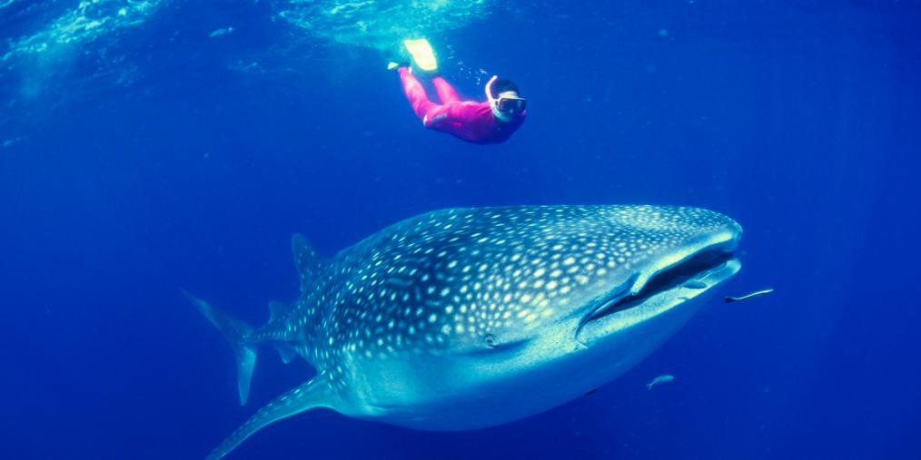 潜水海钓、椰林海浪、饕餮盛宴...飞去亚洲最美五色海洋——宿雾