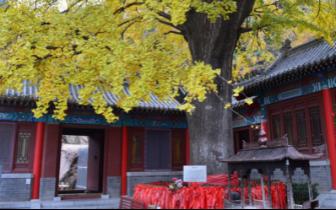 新李沧·生态美|竹子庵公园:感受原生态 体验道家文化