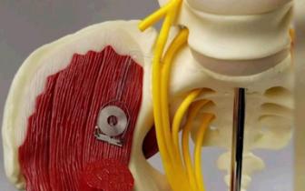 科学家把这个装置植入老鼠体内,加速了神经再生