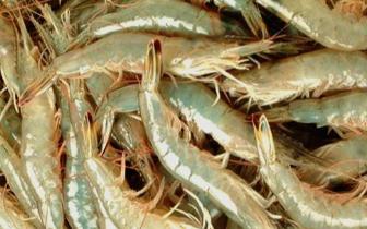 福州市开展养殖对虾质量安全专项整治