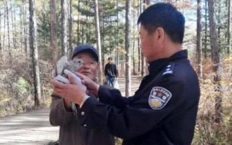 松江河 新万博manbetx下载app松江河森林公安成功救助一只红隼