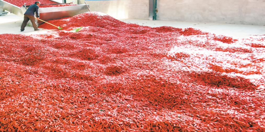 沁县南里乡尖椒加工厂内工人在烘干辣椒